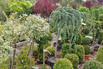 Productie, distributie si vanzare plante ornamentale